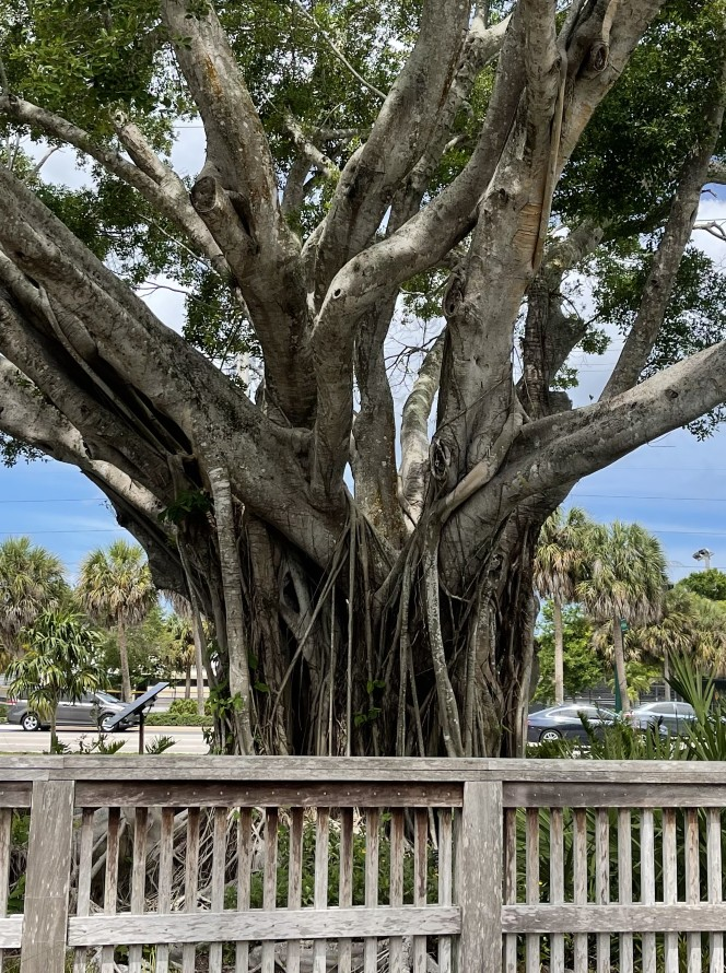 Home Watch Naples Park Beauty in the Park