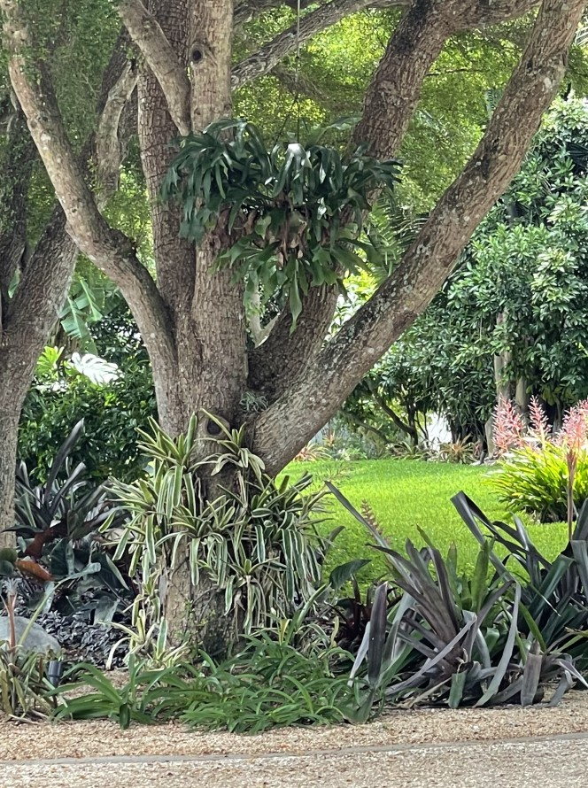 Home Watch Naples Park Lush Landscaping